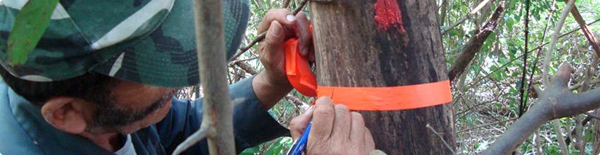 Estudios en materia forestal